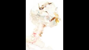 Fraser Parker – Ghost Card (Gimmick not included)