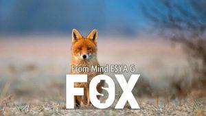 Esya G – Fox Download INSTANTLY ↓